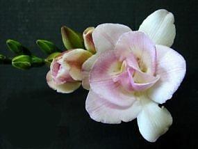 Compro Floricultura