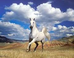 Compro Cavalos