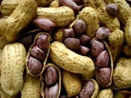 Compro Amendoim cru