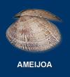 Ameijoa