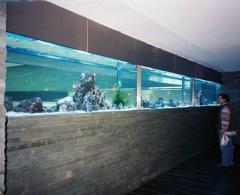 Aquarios de grande dimensao