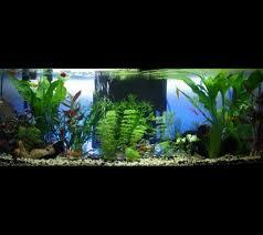 Decoracoes dos aquarios