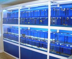 Expositores para peixes