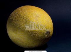 O melão