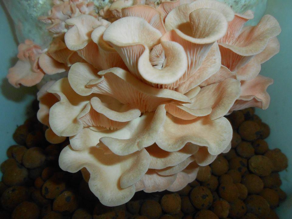 cogumelos_exticos_e_frescos
