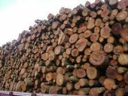 Encomenda Tratamento de madeiras