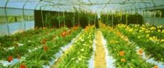 Estufas e viveiros de plantas