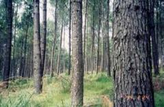 Compra de areas florestais