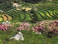 Turismo de natureza e rural