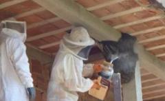 Controlo de vespas